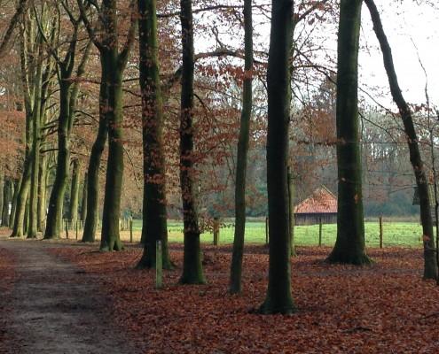 Landgoed Geijsteren bos 6